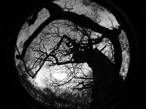 dark-forest2